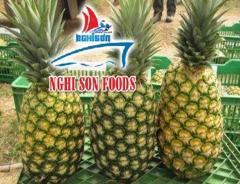 Fresh Pineapple for Sale in Vietnam