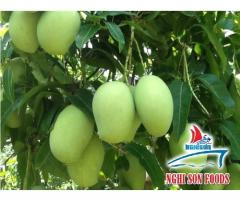 Fresh Mango for Sale in Vietnam