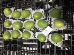 Fresh Guava from Vietnam Supplier in Vietnam