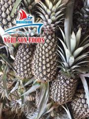 Fresh Queen and Cayenne Pineapple Exporter in Vietnam