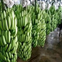 Chuối(High Quality Fresh Cavendish Banana)
