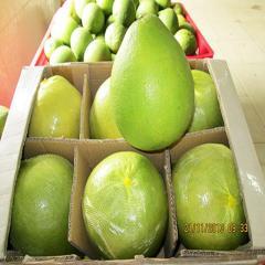 Bưởi xanh tươi Việt Nam chất lượng tốt nhất