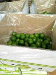 FRESH LIME FOR EXPORT WITH NEW CROP