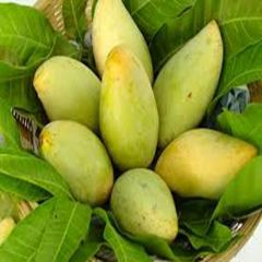 Xoài việt nam  (Fresh Mango for Sale in Vietnam)