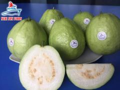 FRESH GUAVA FROM VIETNAM