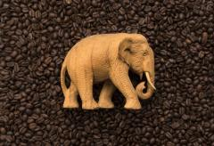 Sell ELEPHANT ROASTED COFFEE BEANS