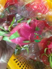 Best Taste Dragon Fruit From Vietnam