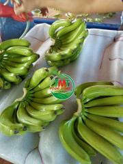 Best Price Cavendish Banana Ready To Export