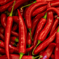 FRESH LONG CHILLI with High Quality from Vietnam
