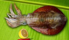 Marinated squids