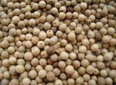 Vietnamese White Pepper 630 Grl (DOUBLE Washed)