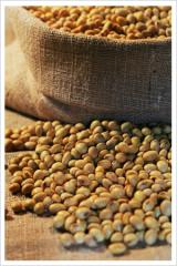 Unmodified soybean