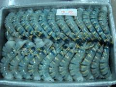 Frozen black tiger shrimp hlso