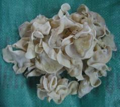 Frozen White Slicd Mushroom