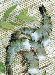 Raw headless shell on black tiger shrimp