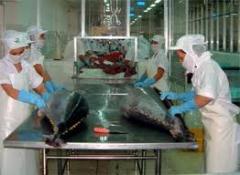 Cá ngừ tươi