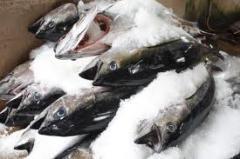 Cá ngừ đông lạnh