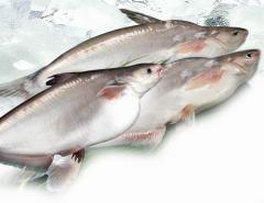 Frozen Cut Basa Fish, Pangasius bocourti