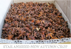 Whole Star Aniseed New Autumn Crop 2012