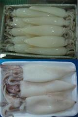 Squid fillet