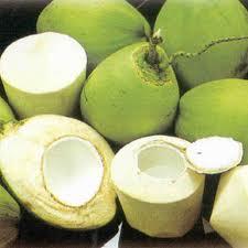 Dừa trái uống nước