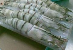 Frozen Black Tiger Shrimp HOSO