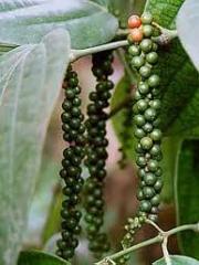 Piperine(Пиперин - экстракт черного перца)