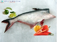 Fresh-frozen herring