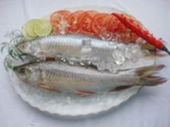 Cá Trôi nguyên con