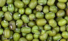 Vietnam green mung bean for sell