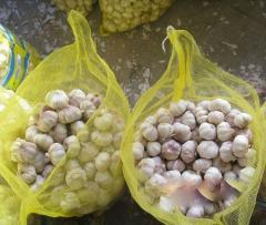 Vietnam garlic, red garlic for sell