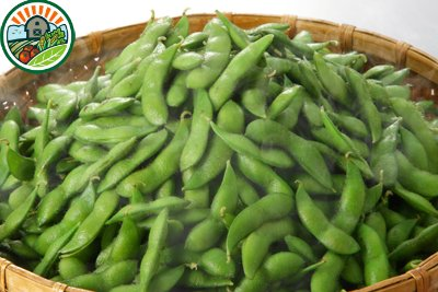 frozen_green_soybean_cut_slice_100_natural_with