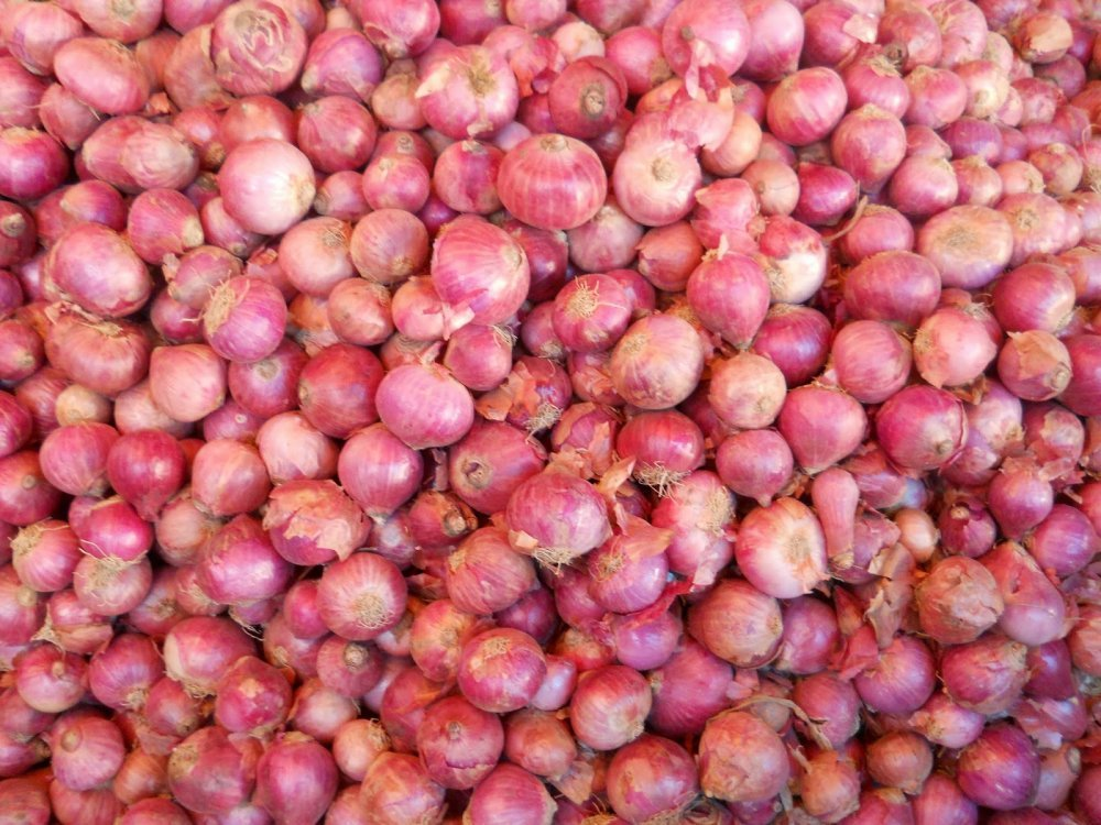 red_onion