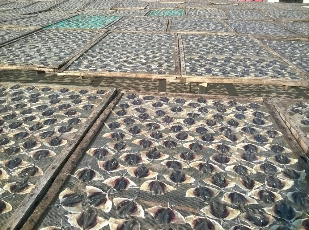 dried_seasoned_salted_moonfish