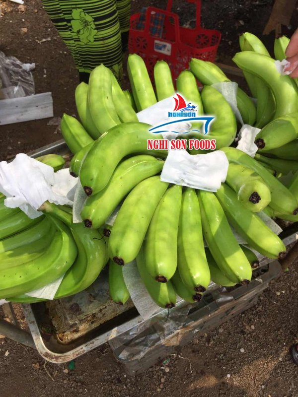 fresh_cavendish_banana_from_vietnam