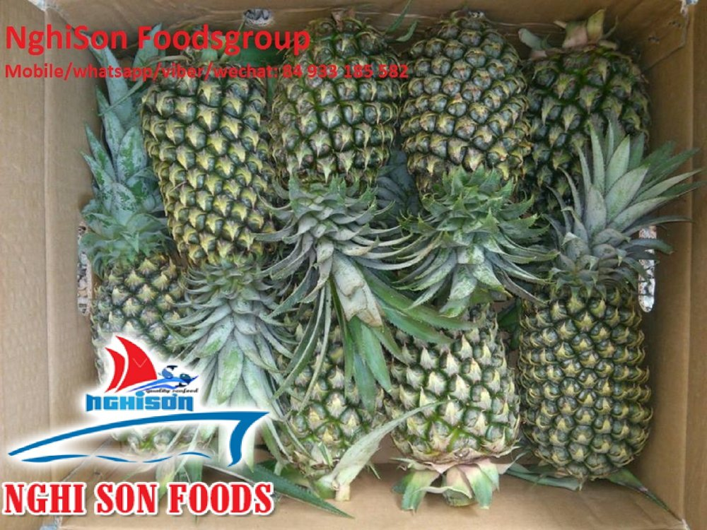 fresh_pineapple_with_high_quality_from_vietnam