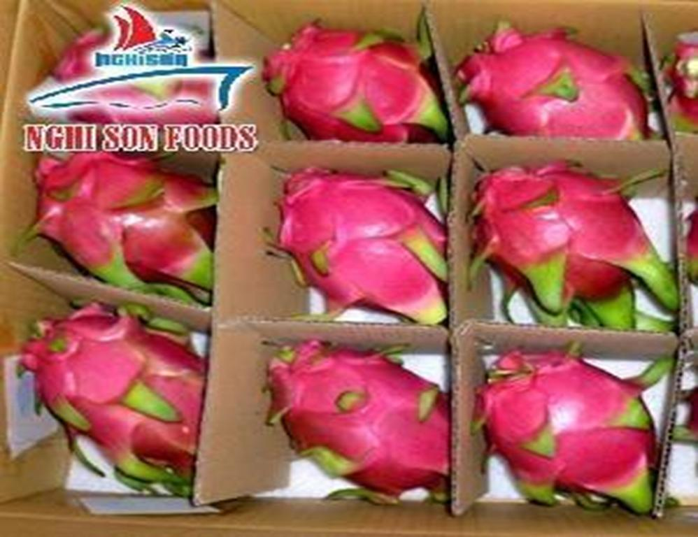 hot_product_dragon_fruit_whasapp_0084_986_365_621