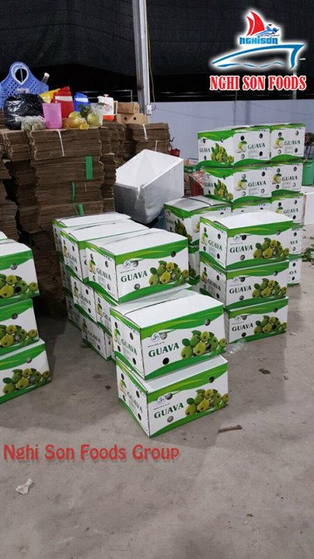 fresh_guava_from_vietnam
