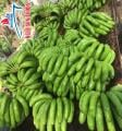 Fresh Cavendish Banana from Vietnam Supplier in Bulk