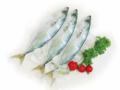 Round scad mackerel