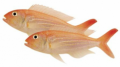 Threadfin bream