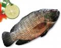 Cá rô phi nguyên con