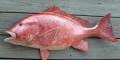 Cá Hồng