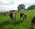 Nguyên liệu và thức ăn chăn nuôi
