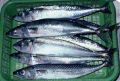 Cá nục Scad