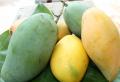 Fresh Hoa Loc Mango