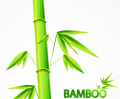 Bamboo International JSC, Ha Noi