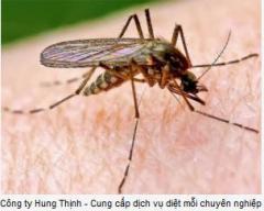 Dịch vụ diệt muỗi – Thuốc diệt muỗi từ cây cỏ
