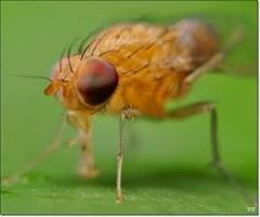 Dịch vụ diệt mối, muỗi, ruồi: Ruồi cũng bị… mất ngủ