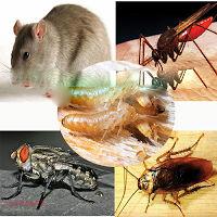 Dich vụ diệt Muỗi